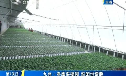 第1报道|九台:冬季采摘园 农闲也增收