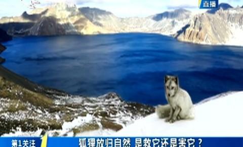第1报道|狐狸放归自然 是救它还是害它?