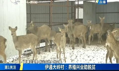 第1报道|伊通大岭村:养殖兴业助脱贫