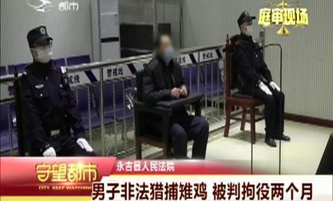 守望都市|永吉县:男子非法猎捕雉鸡 被判拘役两个月