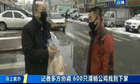第1报道|记者多方协调 600只滞销公鸡找到下家