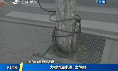 第1報道|大樹繞滿電線 太危險!