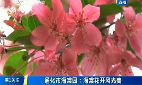 第1报道|通化市海棠园:海棠花开风光美