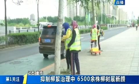 第1报道|长春市开展抑制柳絮工作 6500余株柳树展新颜