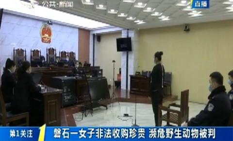 第1报道|磐石一女子非法收购珍贵濒危野生动物被判