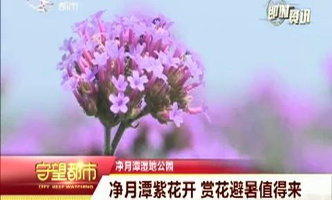 守望都市 净月潭紫花开 赏花避暑值得来