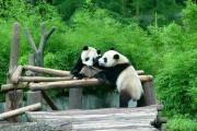 中国最值得一看的野生动物