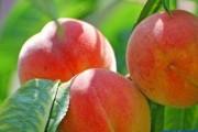 这5种水果营养丰富 最适合夏天吃