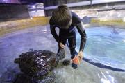 长春海洋动物开启避暑模式