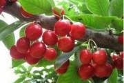 苹果西红柿蓝莓 6种常见食物可以防癌