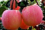 心血管疾病患者如何饮食?苹果玉米要多吃
