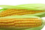 糖尿病吃玉米需注意 黏玉米更易升血糖