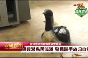 【视频】黑喉潜鸟受困浅滩 警民联手放归自然