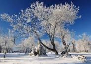 北上赏雪南下避寒 错峰旅游正当时