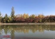 伊通河畔醉秋色 賞葉看景正當時