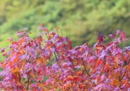 红叶鎏金,层林尽染!陕西南宫山迎来一年中最美季节