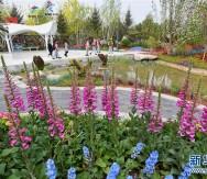 北京世園會開園!看植物花園、文化盛宴、科技元素三大亮點