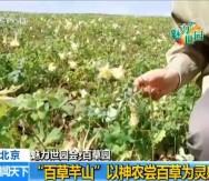 """【魅力世园会】""""三百园""""之百草园 传播中医文化"""