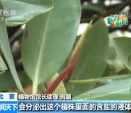 魅力世园会 植物馆温室完成布展 红树林亮相