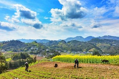 新型职业农民和传统农户有何不同