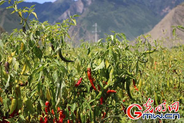 【新时代·边疆行】新时代西藏经济发展即将迎来新的阶段
