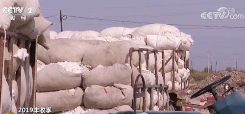 今年我国棉花总产量预计将达到616万吨