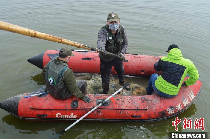 志愿者在候鸟栖息地清理地笼网,保障为以鱼为生的潜鸭类候鸟觅食安全。 王海滨 摄