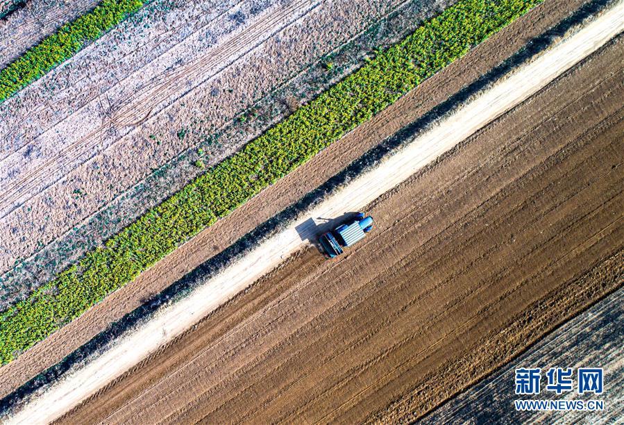(新华全媒头条·图文互动)(7)春色最浓在田间——来自全国春耕备耕的现场观察
