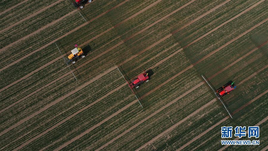 (新华全媒头条·图文互动)(5)春色最浓在田间——来自全国春耕备耕的现场观察