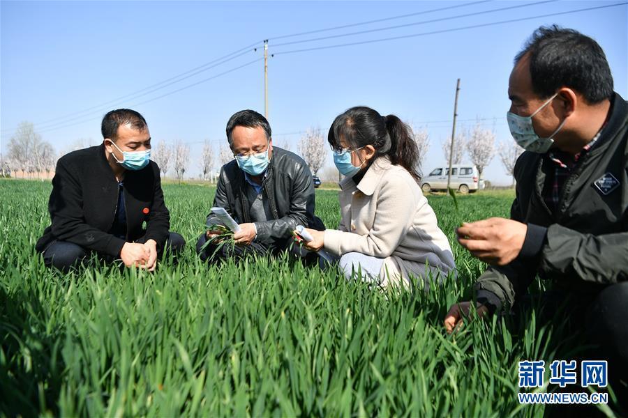 (新华全媒头条·图文互动)(8)春色最浓在田间——来自全国春耕备耕的现场观察