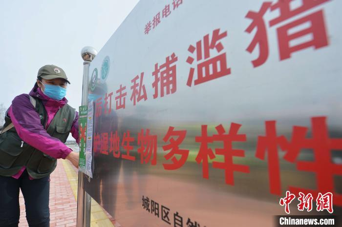 """志愿者张贴""""禁食野味""""的海报。 王海滨 摄"""