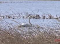 【关注】珍稀鸟类昔日获救  今日放飞翱翔自然