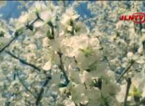 【都市融媒】微视频《传·城》即兴作品:春之美 桃花艳!