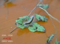 关注 吉林省首例因违法调运林木种苗 妨害动植物防疫检疫案件宣判