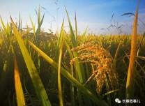 长春市今年重点推广15项种植技术