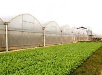 万博手机注册省拟推荐9地开展农业产业强镇示范建设项目