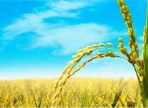優先發展農業農村的現實路徑