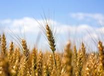 为下一年丰收播种希望——全国加快部署秋冬种工作综述