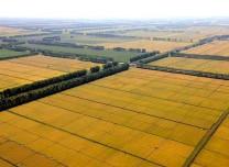 正在公示!吉林省41个农田建设项目有望获中央补助
