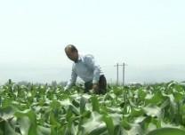 农业农村部发布消息 | 我国初步建成国家农业观测监测网络