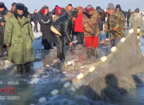 今冬首次破冰!查干湖冬网第一捞 第一网鱼浮出水面