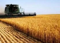 大丰收!yabo亚博体育下载省今年粮食总产量达775.6亿斤,净增量居全国首位