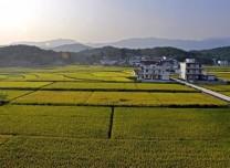 第二届yabo亚博体育下载省农业农村发展论坛举行