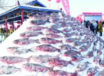 捞鱼过大年!中国·吉林松花湖首届冰下野生鱼捕捞大赛举行