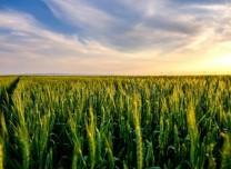 三部門聯合出臺指導意見 實施農機報廢補貼 促進農業綠色發展