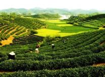 農業農村部:一季度農產品質量安全例行監測合格率達97.9%