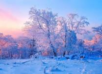 吉林旅游體育消費年⑤丨活動多、優惠大,吉林市喊你一起賞霧凇、滑粉雪