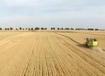 我國糧食產量連續5年站穩1.3萬億斤臺階 糧食連年豐產背后靠什么支撐?