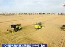 2020年我國糧食生產基本面良好 預計產量將達到6.7億噸