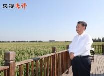 【央视快评】抓住实施乡村振兴战略的重大机遇